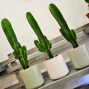 cactus-barcelona