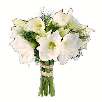 amaryllis blancos barcelona