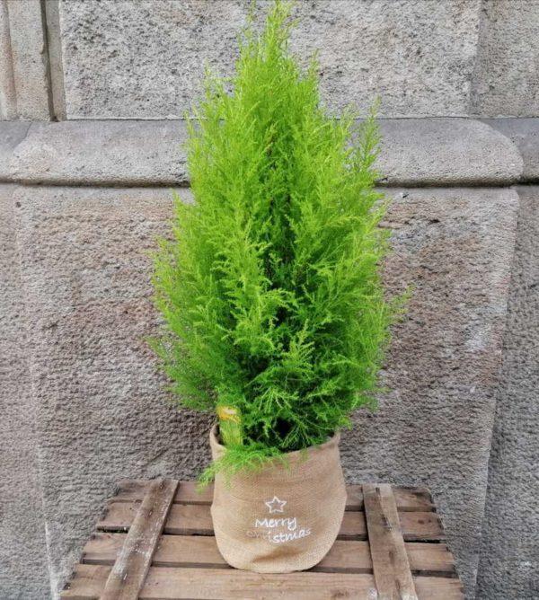 arbol-navidad-50cm