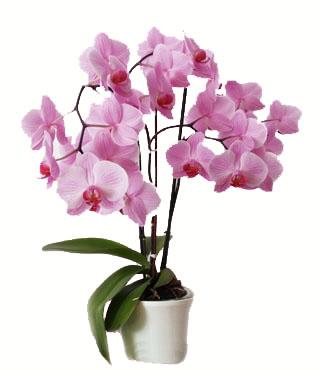 enviar flores san valentin