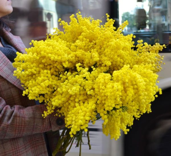 flores-mimosa-barcelona