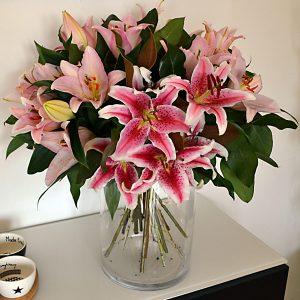 lilliums rosa barcelona