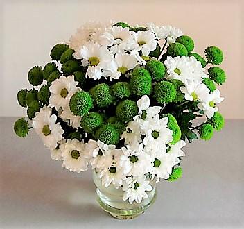 margaritas verdes blancas