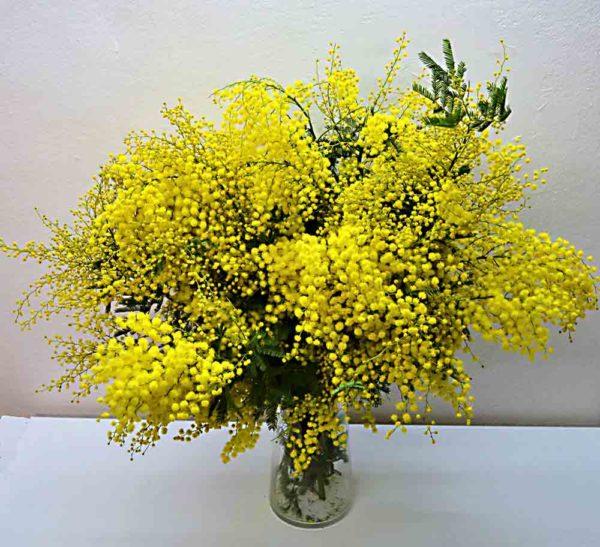 mimosa-barcelona