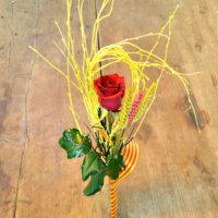 nueva rosa sant jordi