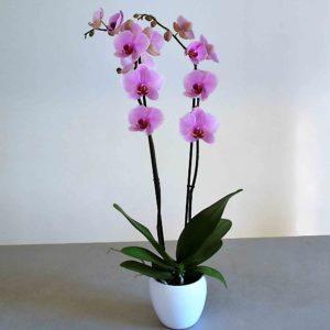 orquidias-rosa-barcelona