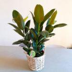 planta-caoutchou-barcelona