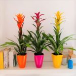 plantas-bromelias-barcelona