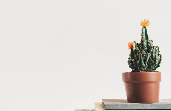 plantas domicilio