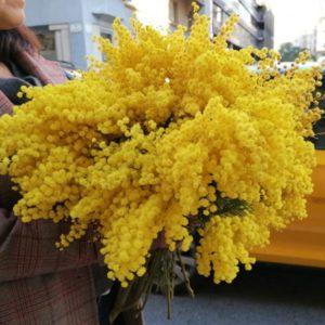 ramo-flores-mimosa-barcelona