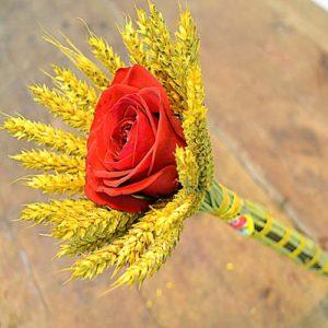 rosas espigas san jordi