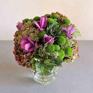 curcuma hortensias
