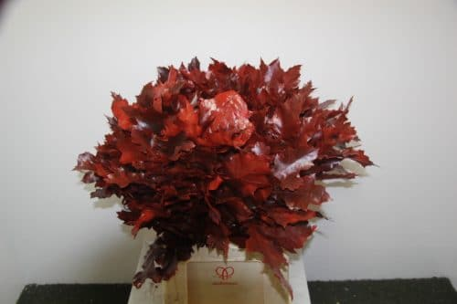 roble-flores-barcelona