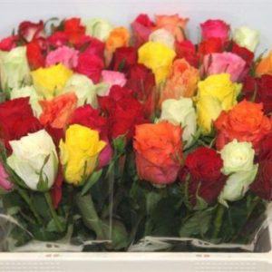 rosas-coloridas-barcelona