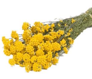 Lona-seca-amarilla