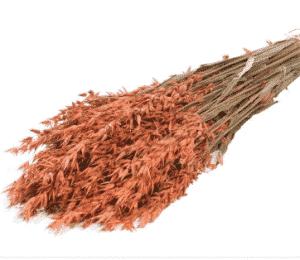 graminea-naranja-seca