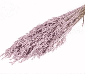 graminea-seca-rosa