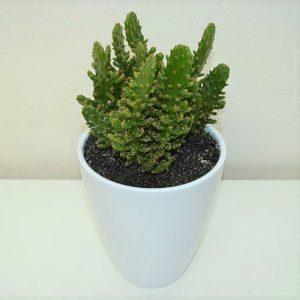 tienda-cactus-barcelona