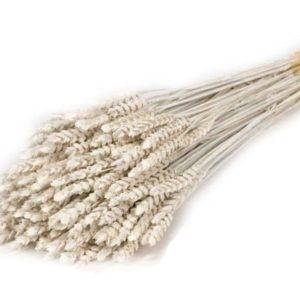 trigo-seco-gris