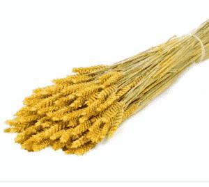trigo seco amarillo