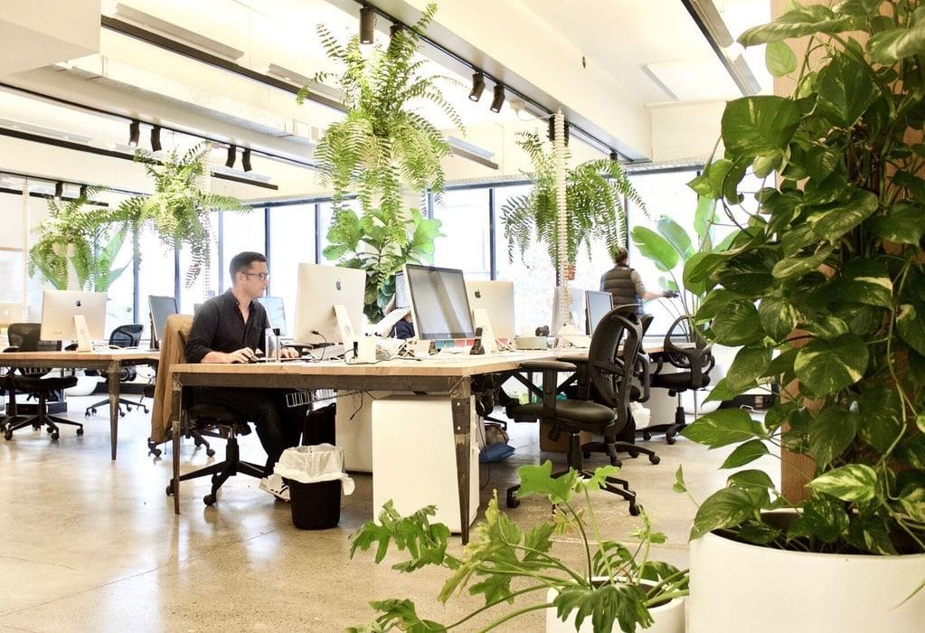 plantas oficina