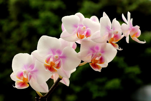hermoso ramo de orquideas
