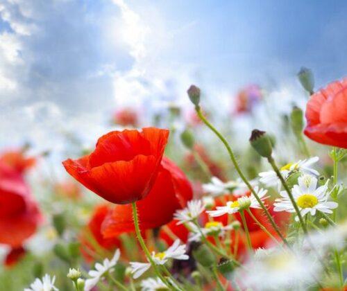 Flores para el verano