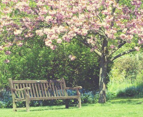 consejos para plantas de jardín
