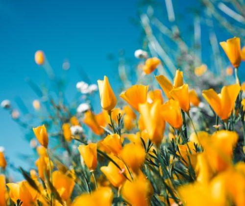 mejores-flores-para-regalar