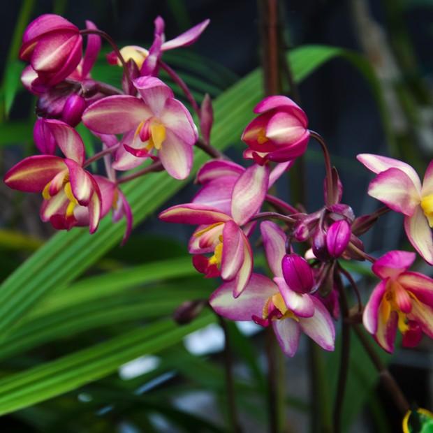 Reparto de flores a domicilio en Badalona